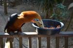 a bird in the botanical garden in Pyin Oo Lwin