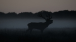 Can also roar in the mist