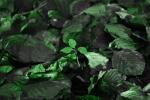 green_in_green