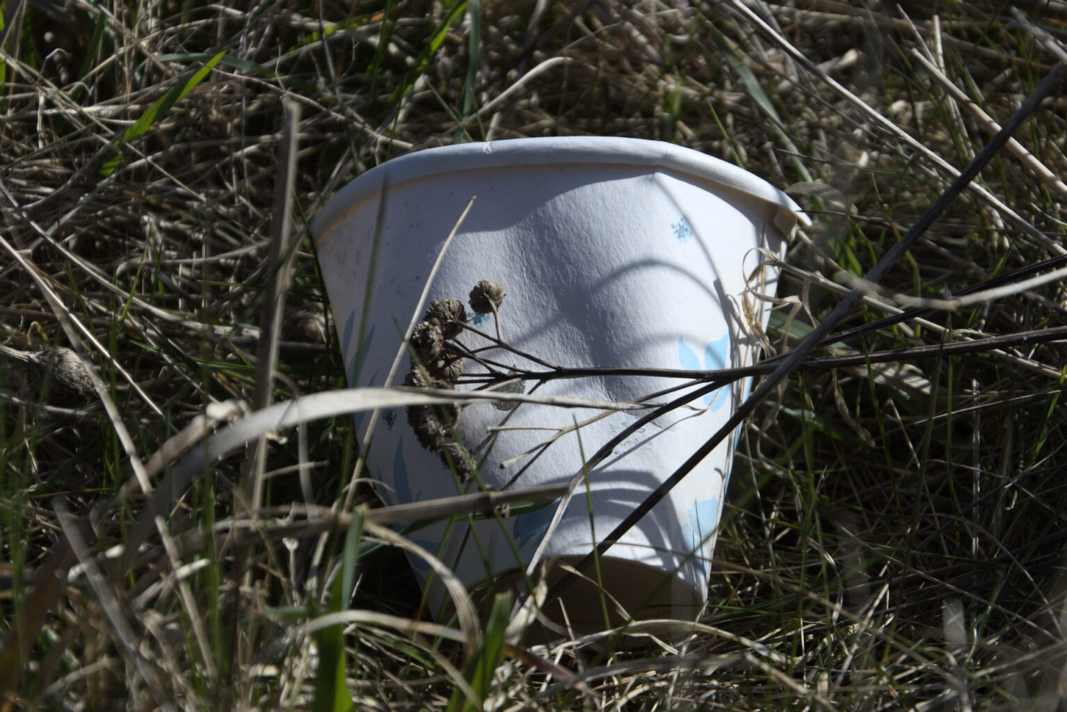 single use cup in the grass
